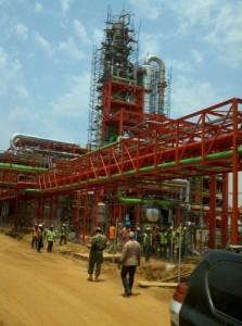 Sierra Leone Plant